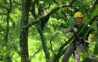 ISA Certified Arborists