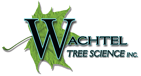 Wachtel Tree Science Retina Logo