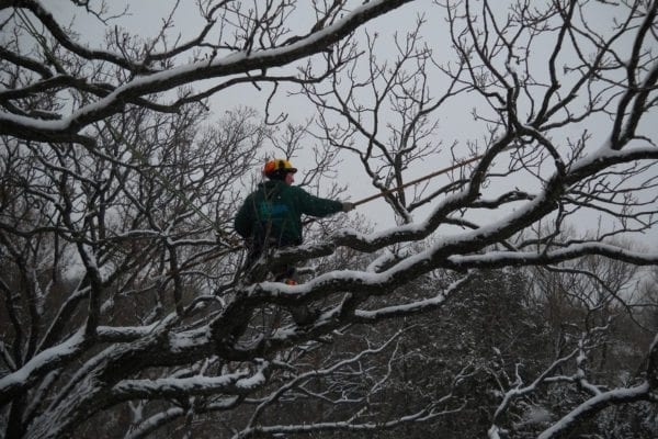 Winter Tree and Shrub Trimming Services