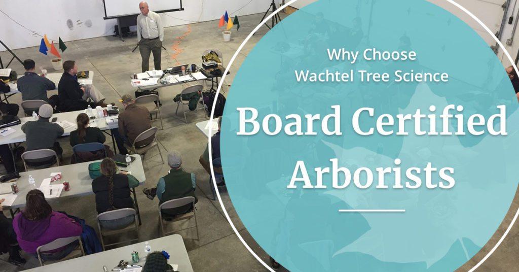 board certified arborists | Wachtel Tree Science