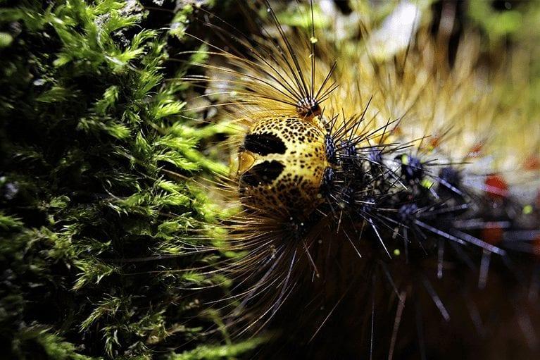gypsy_moth_image