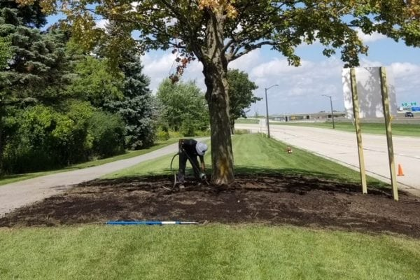 wachtel arborist performing soil care