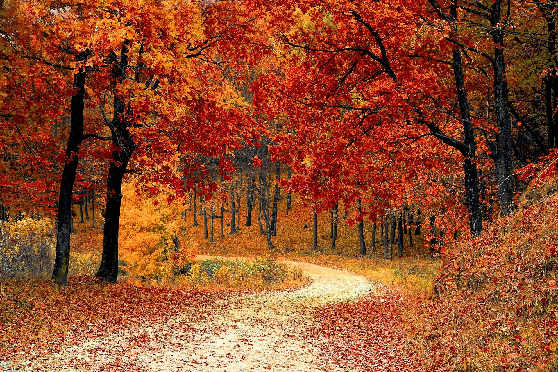 The Best Trees To Plant For Fall Colors Wachtel Tree Science
