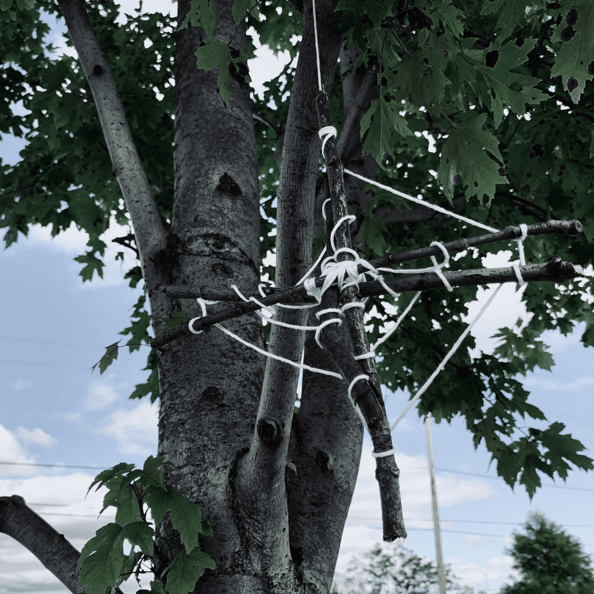 Decorating Your Outdoor Trees For Halloween Wachtel Tree Science