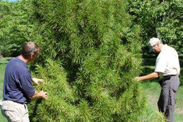 residential tree consulting